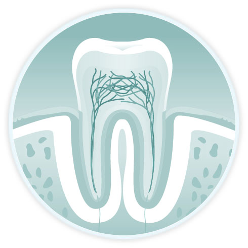 endodontic diagram showing tooth roots